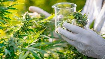 La Justicia Federal se sumó al debate por el cannabis medicinal