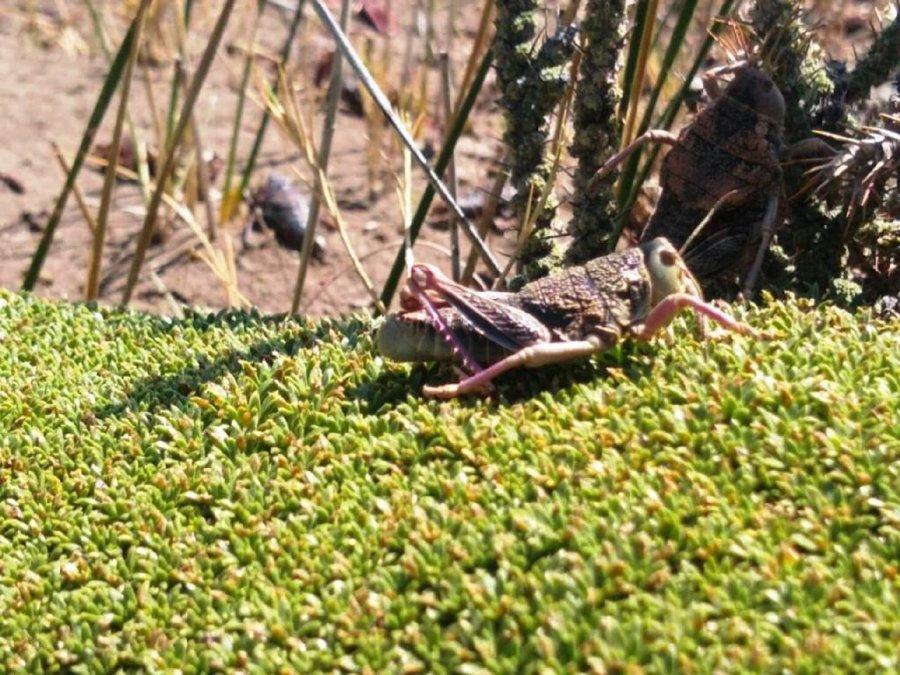 Alertan sobre insectos caníbales en la Patagonia