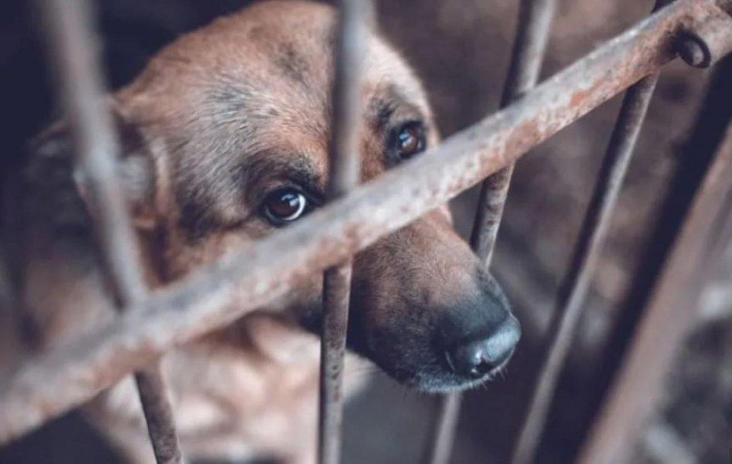 Se aprobó la Ley que pena el maltrato animal