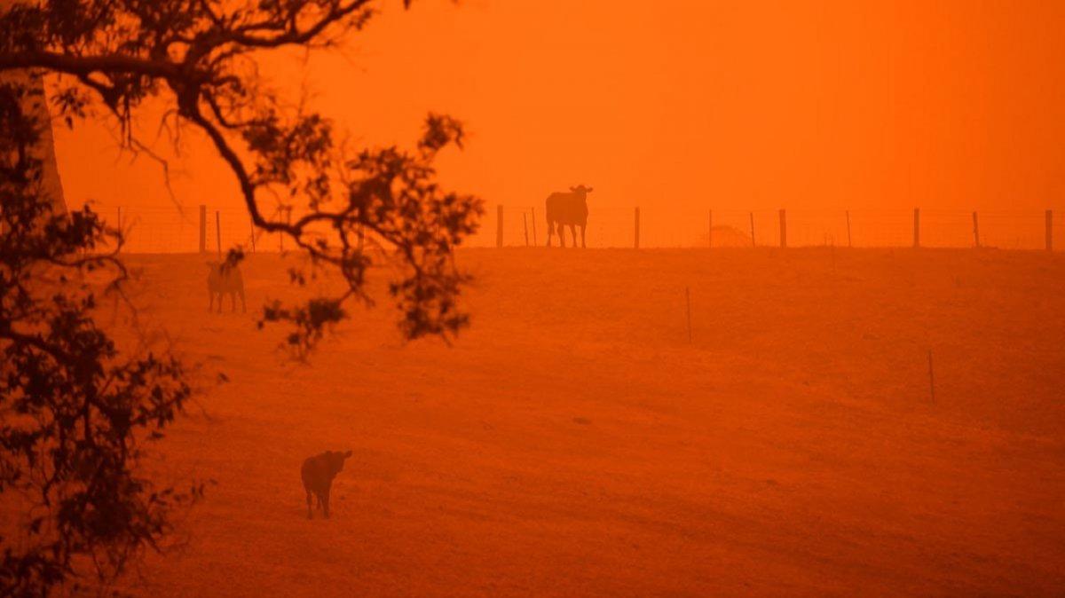 Los incendios podrían cambiar el clima en la Tierra