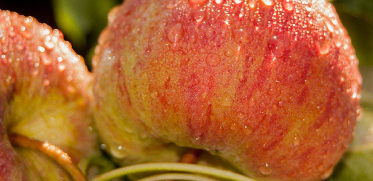 Senasa pide a los turistas evitar ingresar con frutas a la Patagonia