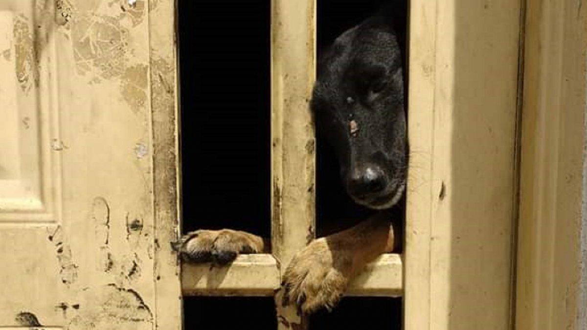 Intentan ubicar a dos perros que sobrevivieron a un incendio