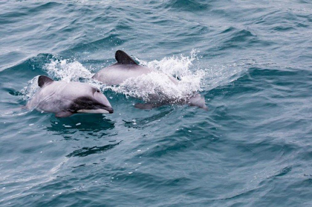 Delfines llegando al Puerto