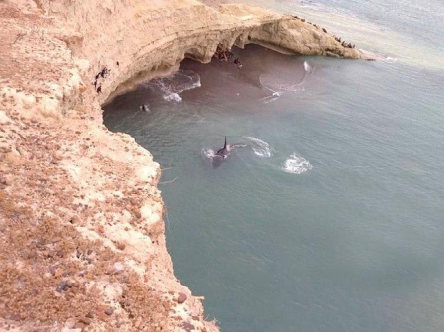 Llegaron los primeros ejemplares de ballenas a la provincia.