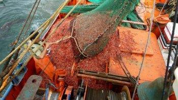 A raíz de los bloqueos impuestos en las rutas por el SOMU, en Madryn hubo que tirar 500.000 kilo de langostino.