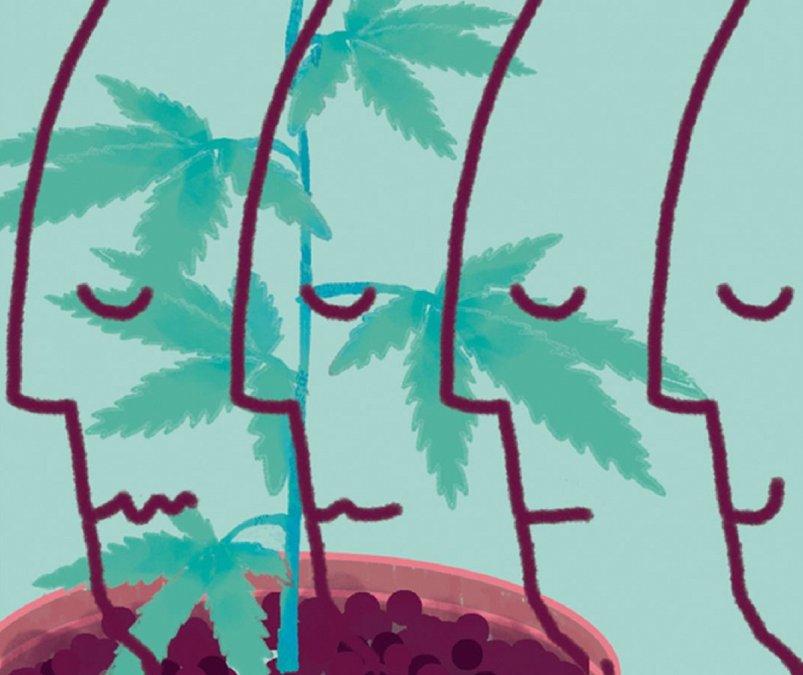 El Cannabis y el derecho a no sufrir