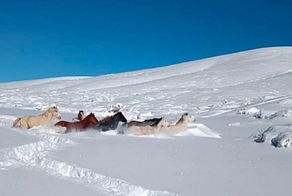 En algunos sectores de Cushamen la nieve superó el metro y medio.