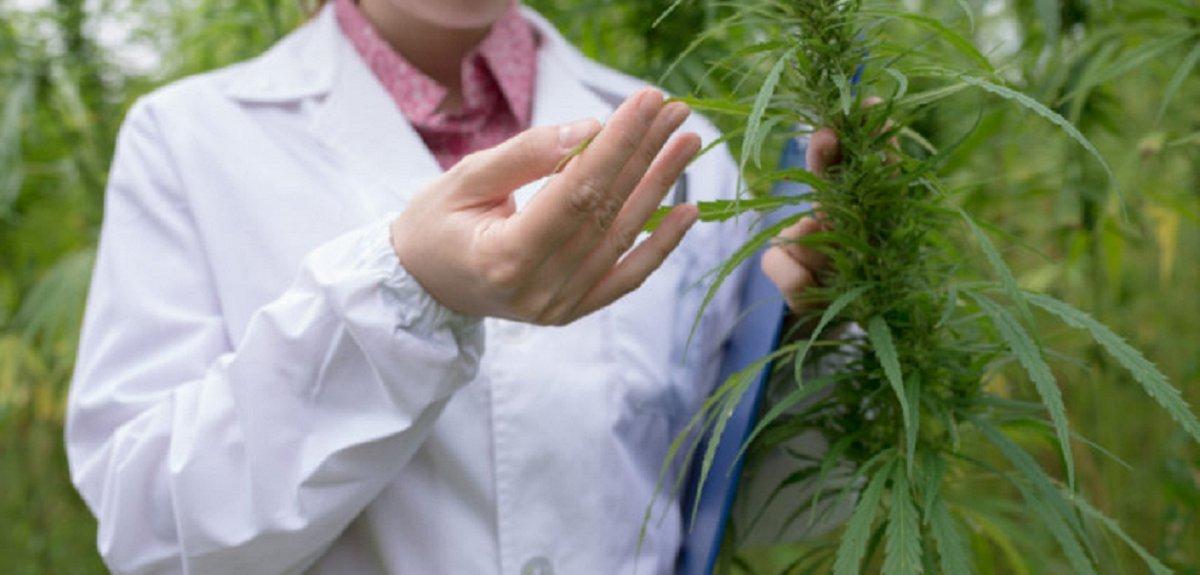 El proyecto busca establecer un marco regulatorio para la investigación cientifica del cannabis.
