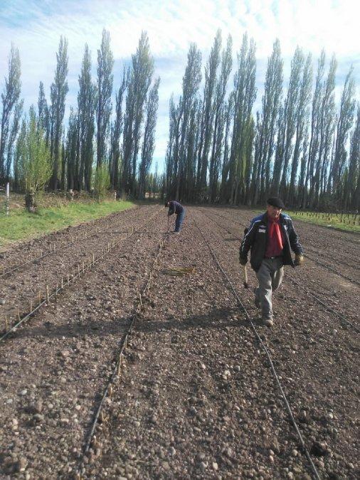 El trabajo fue encabezado por el director de la Regional Javier Marabolí