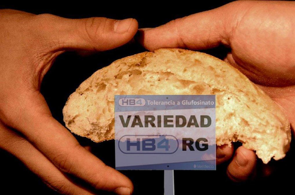 Las semillas genéticamente modificadas comenzaron a tener un marco regulatorio en el país en el año 1991 con la creación de la Comisión Nacional de Biotecnología Agropecuaria (CONABIA).