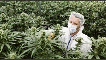 Tras la llegada de la minería planean producir cannabis en Chubut