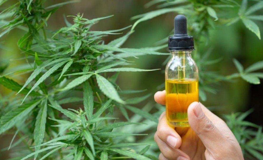 La Universidad investigará el uso medicinal del cannabis.