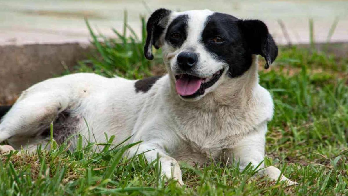 El Municipio Rada Tilly da en adopción a perros abandonados. Imagen ilustrativa.