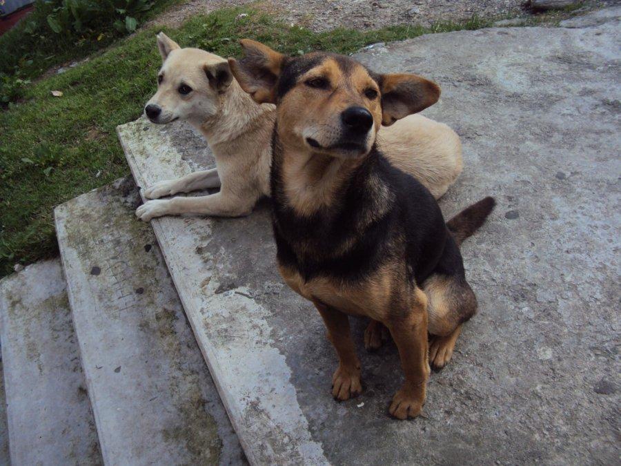 El proyecto de ordenanza de equilibrio poblacional de perros será tratada en la próxima sesión