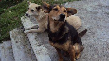 Superpoblación canina: el proyecto será tratado en la próxima sesión