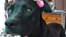 altText(Piden prisión para el policía acusado de asesinar a la perra Tita)}