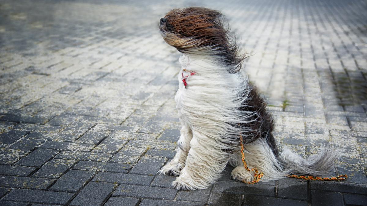 El miércoles será ventoso
