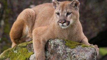 La ley generó el repudio de varias organizaciones en defensa de los animales.