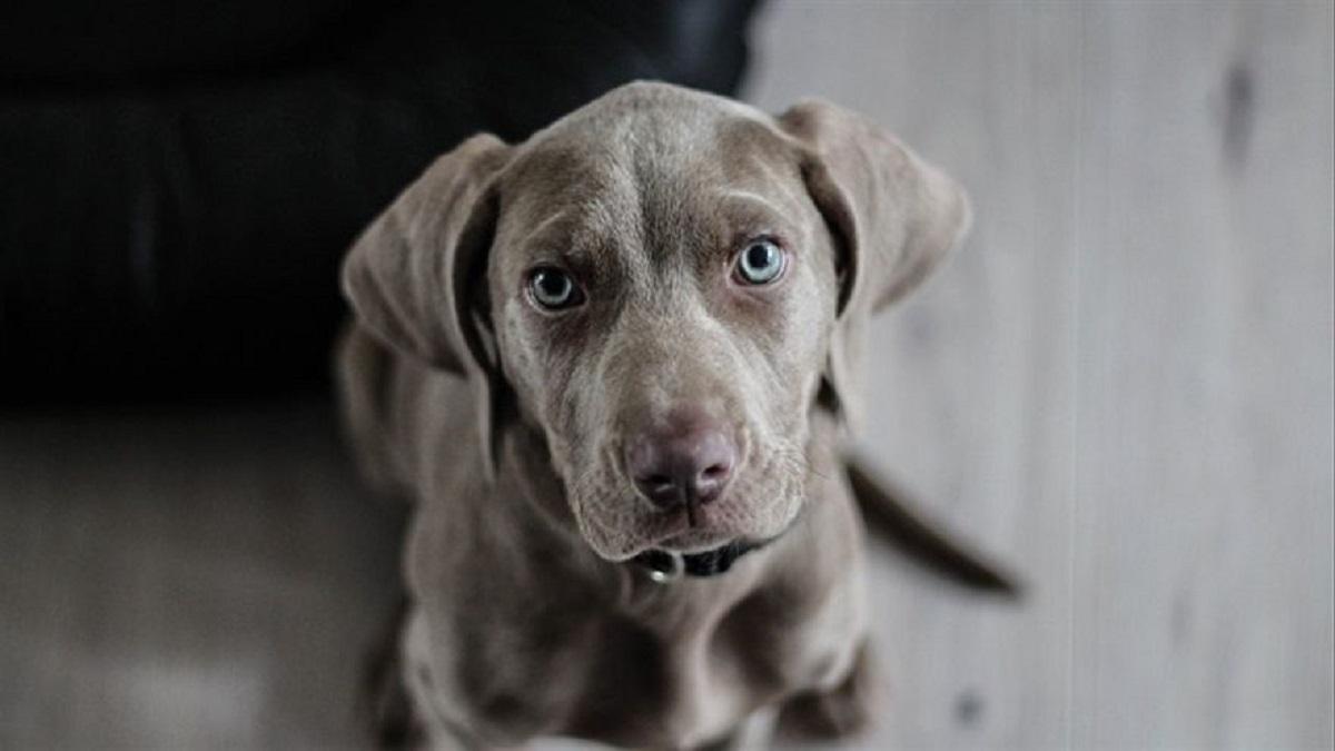 Mantener un perro cuesta $9.200 mensuales.