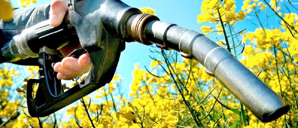 El Gobierno Nacional volvió a prorrogar la vigencia de la Ley de Biocombustibles.