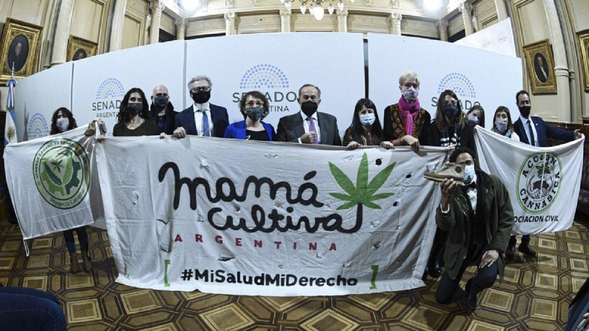 El Senado de la Nación aprobó el marco regulatorio de producción de cannabis medicinal.