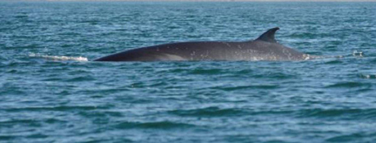 Dos ballenas fueron captadas por un comodorense.