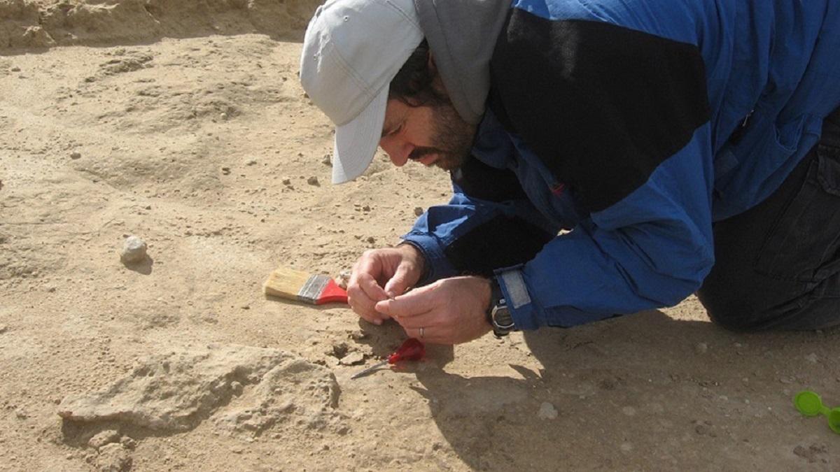 Hallaron el fósil de un vampiro gigante en una cueva. Foto: Télam