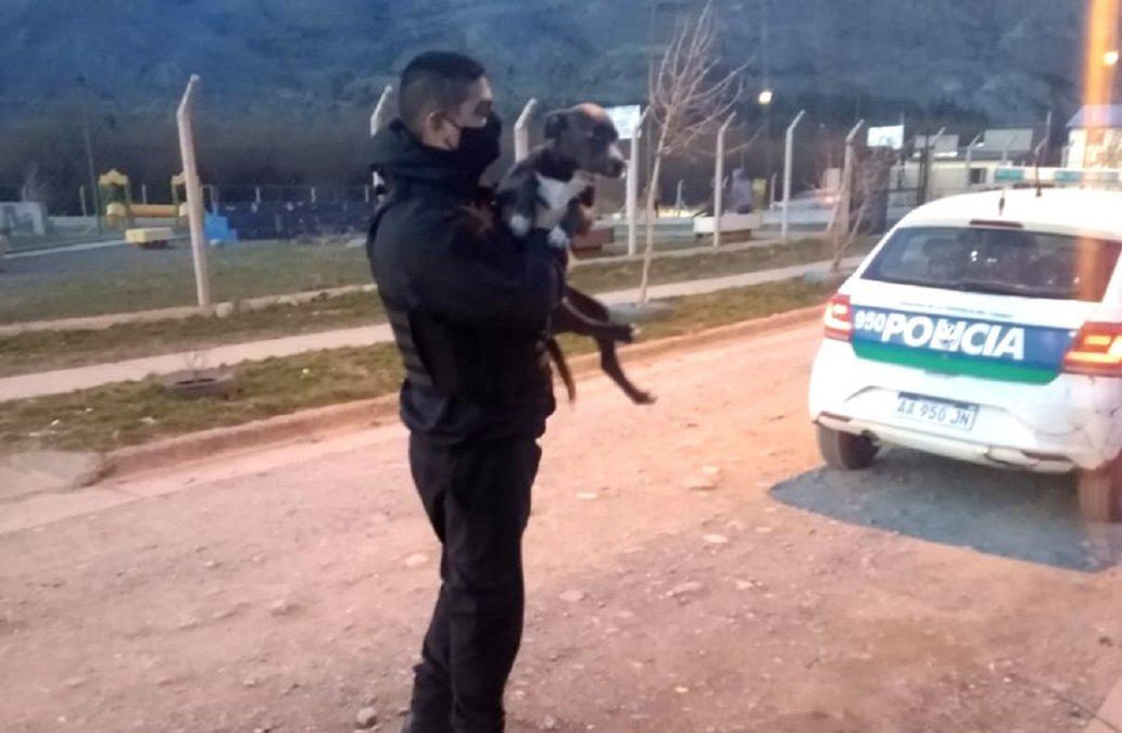 Policía recuperó un perro que había sido robado en Esquel