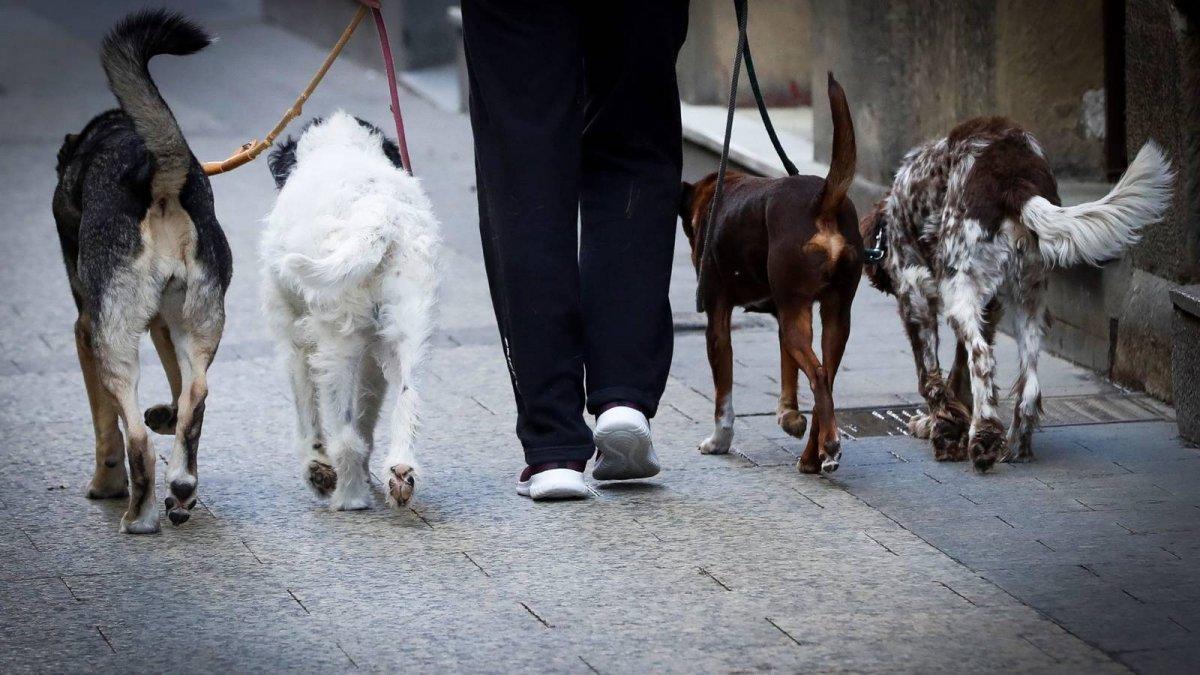 Rada Tilly: Voluntarios podrán sacar a pasear a los perros sin hogar