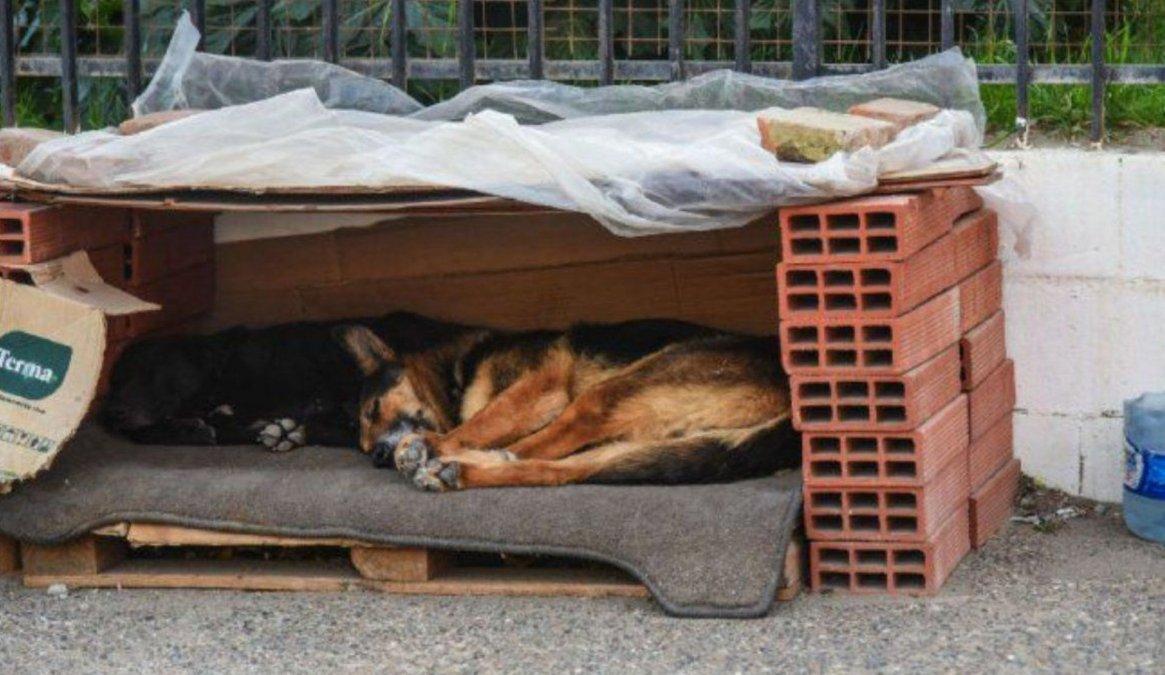 Vecinos se oponen a la devolución de perros a la calle