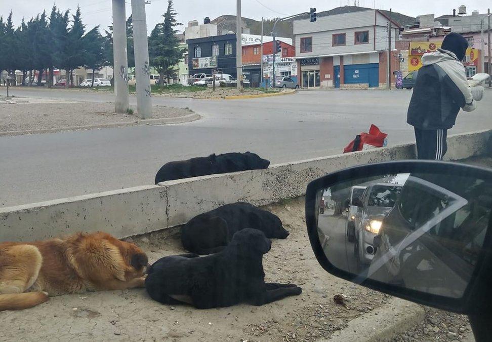 Ordenanza de perros: Es un proyecto superador