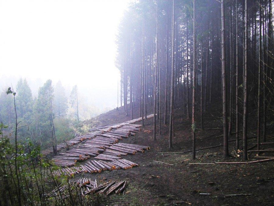 Provincia incrementa acciones de manejo preventivo en forestaciones