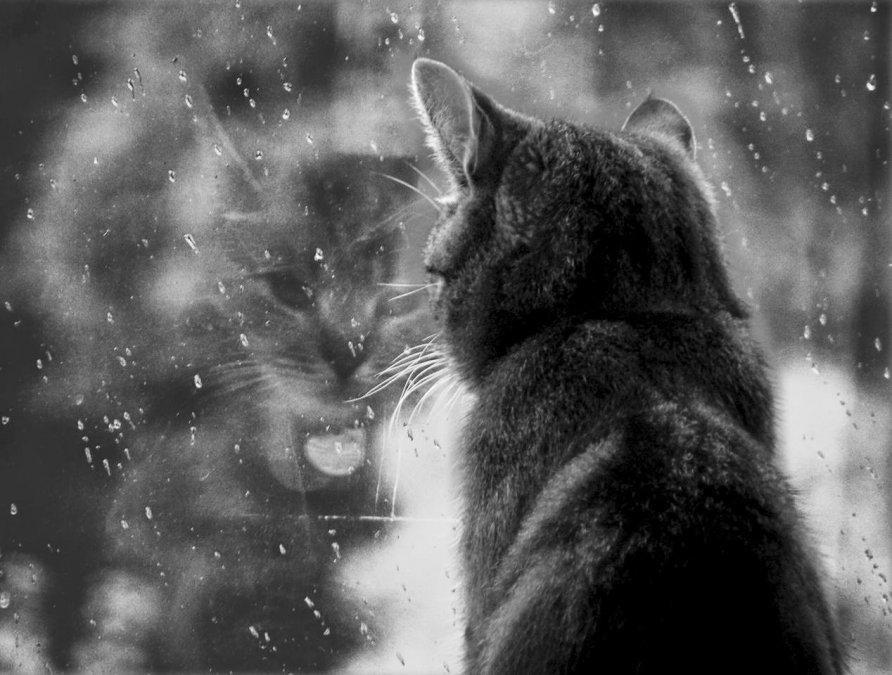 Será un jueves con chaparrones de lluvia y lloviznas