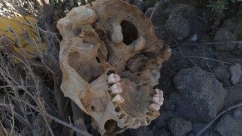 Hallaron restos de un cráneo humano en la Costanera